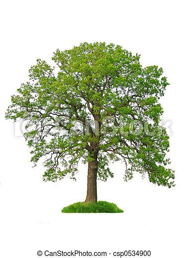arbre, isolé - csp0534900