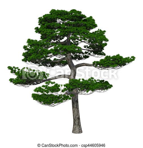 arbre japonaise pin rendre blanc 3d arbre japonaise. Black Bedroom Furniture Sets. Home Design Ideas