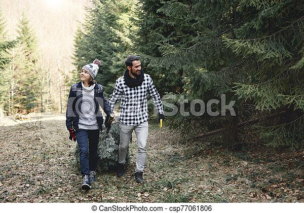 arbre, noël, gai, fils, papa, sien, porter - csp77061806
