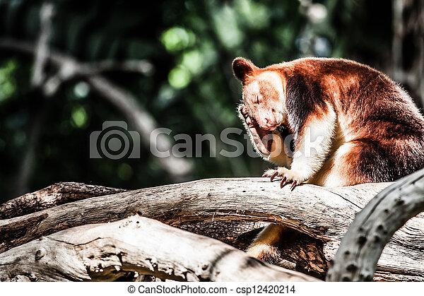 arbre, ours panda, rouges - csp12420214