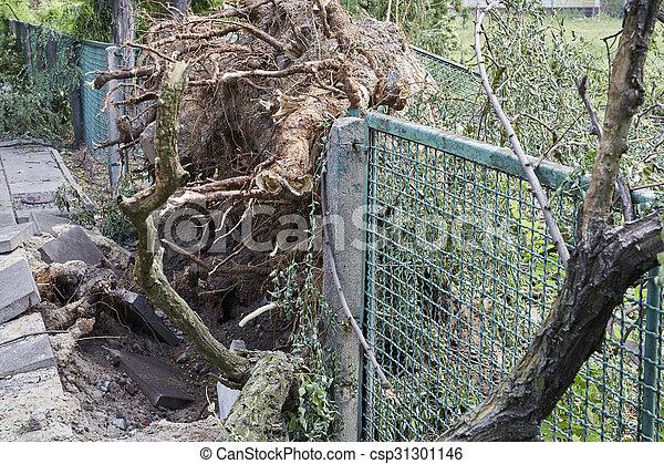 arbre, parc, baissé - csp31301146