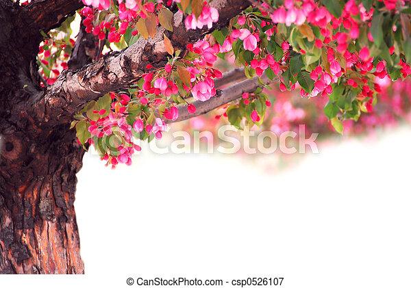 arbre, pomme - csp0526107