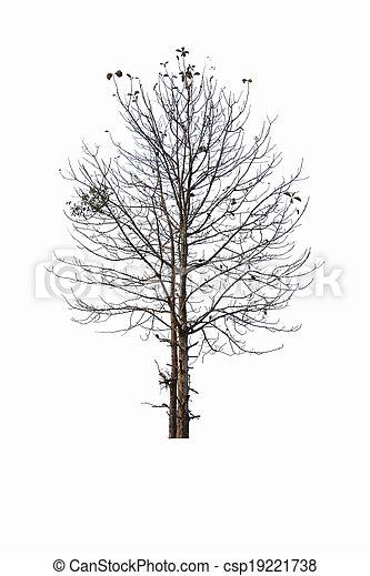 arbre, presque, mort - csp19221738