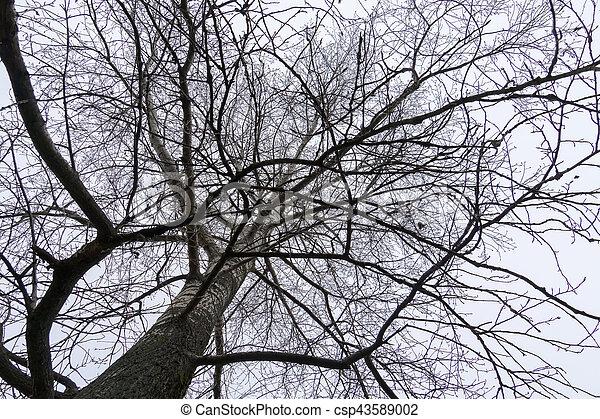 arbre sans feuilles branches csp43589002 - Arbre Sans Feuille