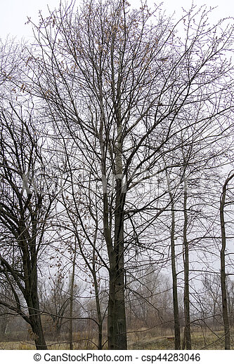 arbre sans feuilles branches csp44283046 - Arbre Sans Feuille