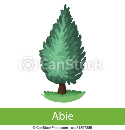 Arbre sapin dessin anim ic ne arbre sapin illustration dessin anim unique fond blanc - Dessin sapin vert ...