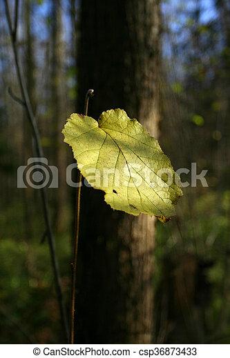 arbre, solitaire, feuille, forêt - csp36873433