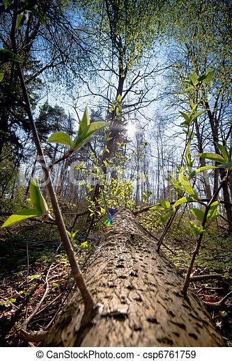 arbre tombé, forêt - csp6761759