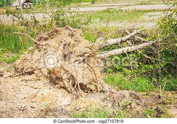 arbre tombé - csp27107819