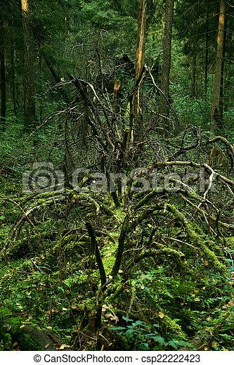 arbre tombé - csp22222423