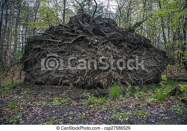 arbre tombé - csp27586529