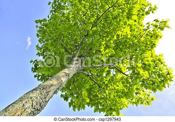 arbre vert - csp1297943