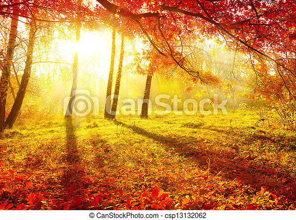arbres, automne, automne, automnal, leaves., park. - csp13132062