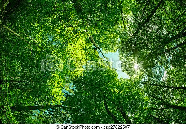 arbres - csp27822507