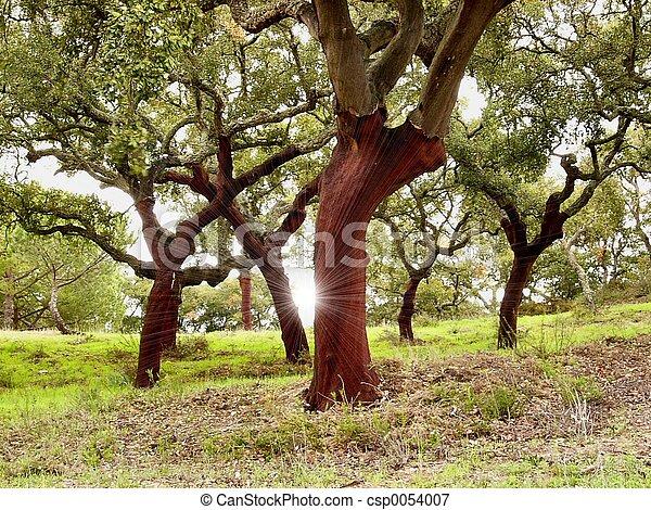 arbres, bouchon - csp0054007