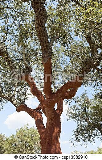 arbres, bouchon - csp13382910