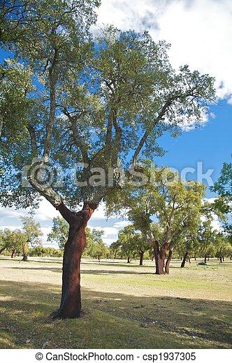 arbres, bouchon - csp1937305