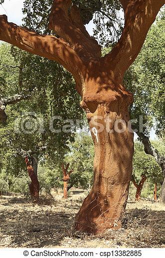 arbres, bouchon - csp13382885