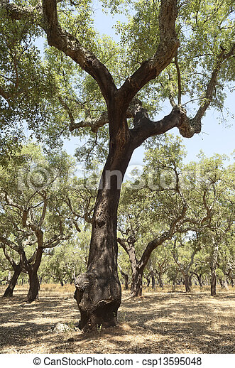 arbres, bouchon - csp13595048