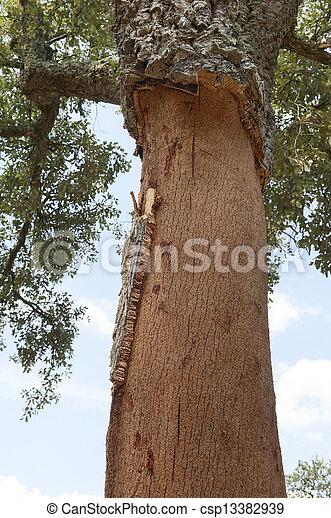 arbres, bouchon - csp13382939