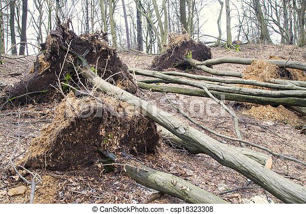 arbres, déraciné, orage, après - csp18323308