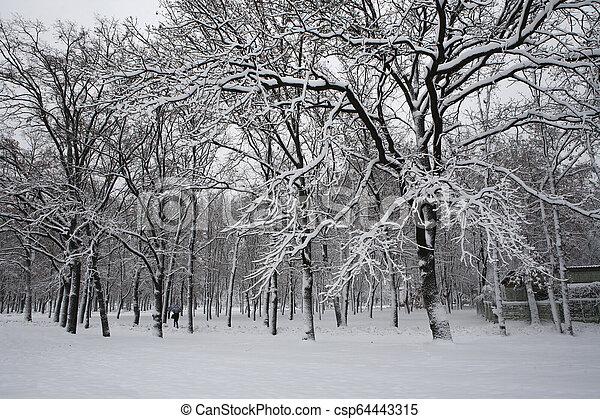 arbres hiver - csp64443315