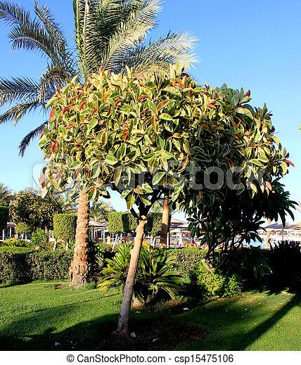 arbres verts - csp15475106