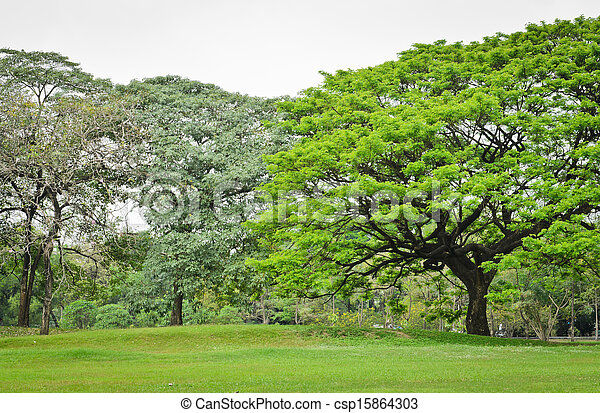 arbres verts - csp15864303