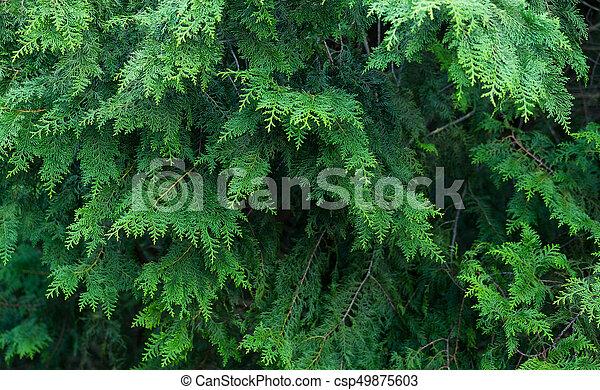 arbres verts - csp49875603