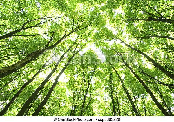 arbres verts, fond - csp5383229