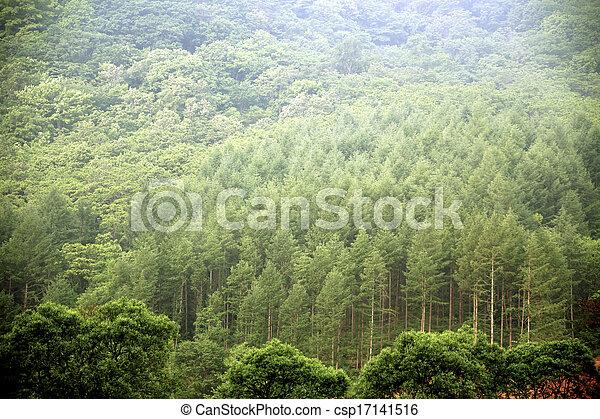 arbres verts - csp17141516