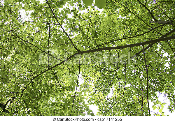arbres verts - csp17141255