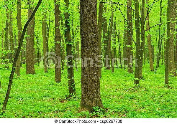 arbres verts - csp6267738