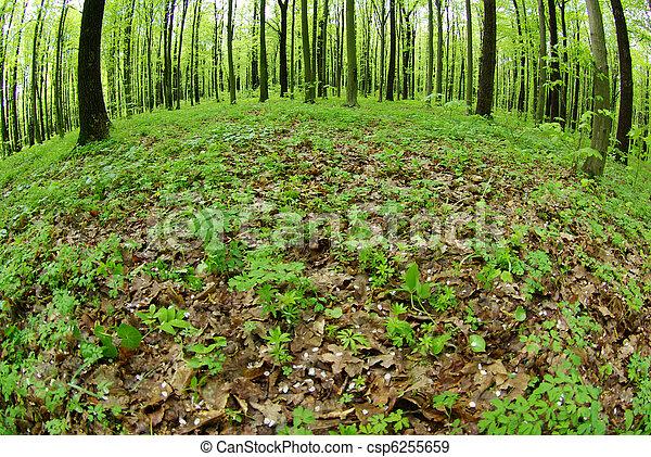 arbres verts - csp6255659