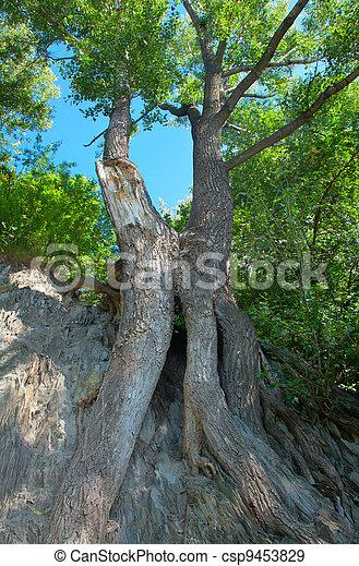 arbres verts - csp9453829