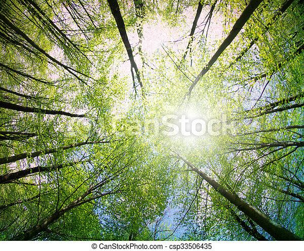 arbres verts - csp33506435