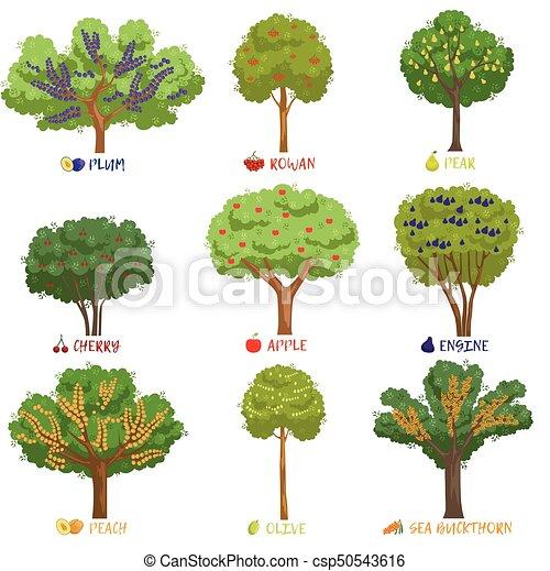 Arbustos diferente jard n conjunto rboles fruta - Lista nombre arbustos ...