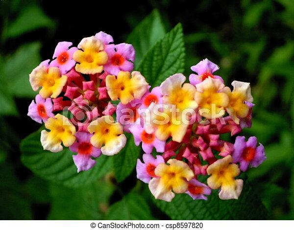 Arbustos Flor Bosque Diferente Colores Arbusto Bosque Flores - Arbustos-de-flor