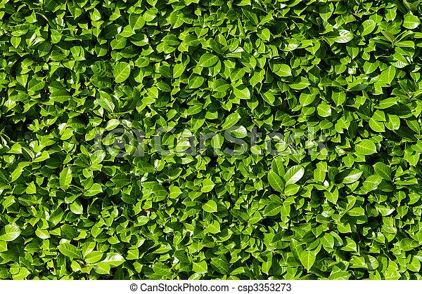 arbustos, laurel, cerca, verde sai - csp3353273