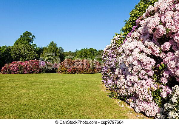 Hermoso arbustos rododendro jard n soleado rboles foto de archivo buscar fotograf as y - Arbustos de jardin ...