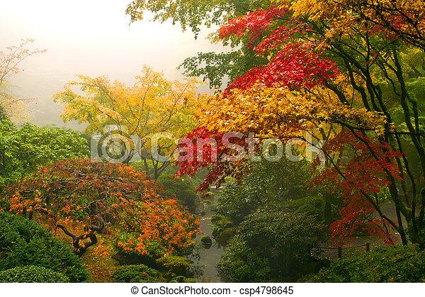 Árboles de arce japoneses en otoño - csp4798645