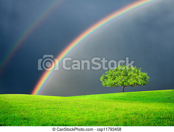 Campo verde con árbol y arco iris doble - csp11793458