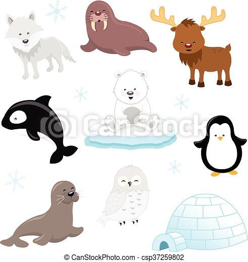 arctic animals collection of cute arctic animals