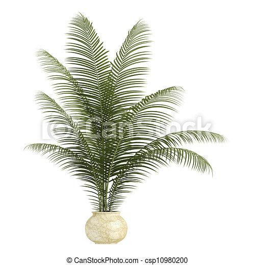 Areca palm houseplant - csp10980200