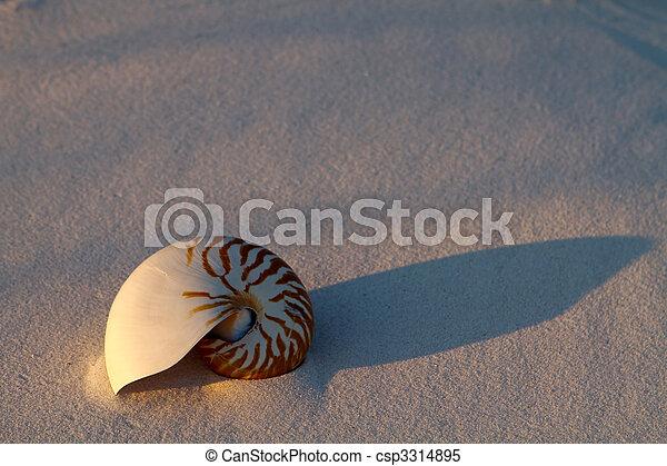 Nautilus caparazón en arena - csp3314895