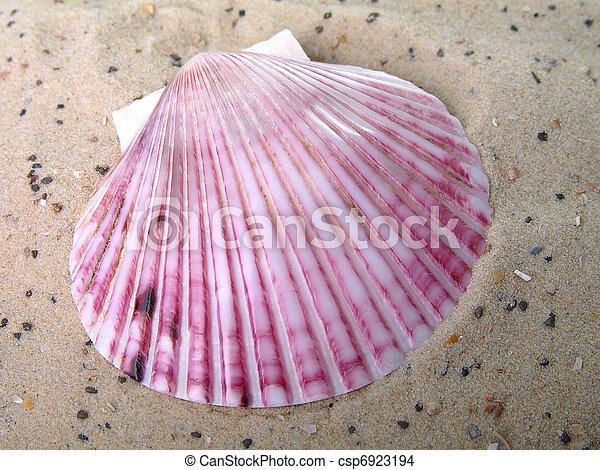 Concha de mar en la arena - csp6923194