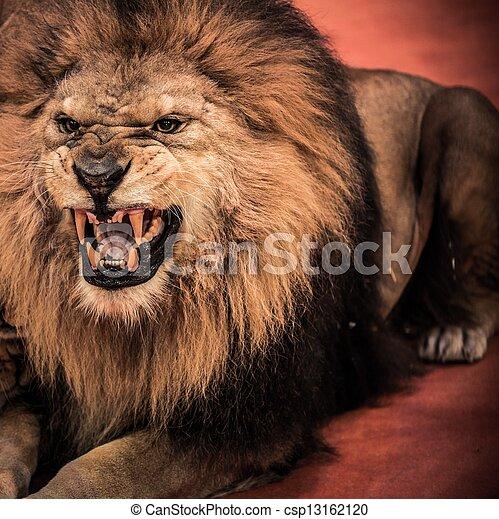 Arena, närbild, skott, cirkus, lejon, underbar, rytande ...