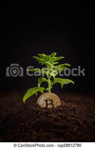 argent, concept, croissance, numérique - csp58812780