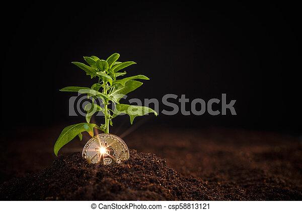 argent, concept, croissance, numérique - csp58813121