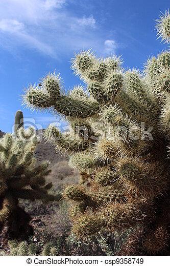Arizona Cactus - csp9358749